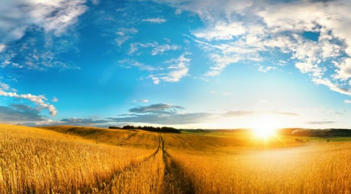 Beautiful natural landscape panorama of golden wheat field at sunset against background of evening blue sky with clouds. Bright colorful pastoral image.